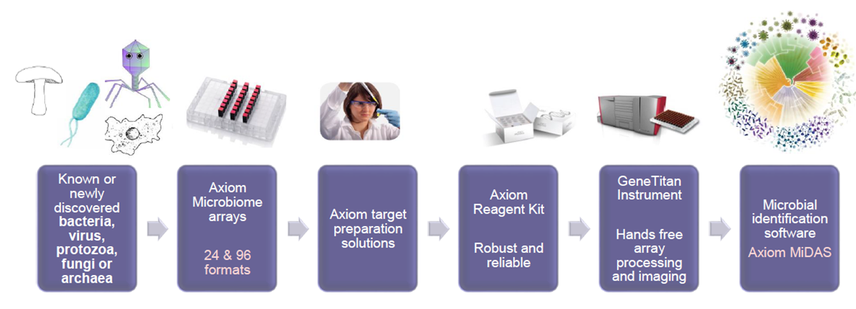Axiom array process